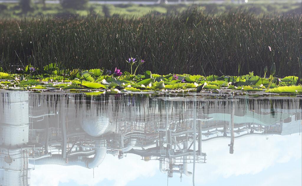 Maica Gugolati, Floating Tropics, Narcissus. 2019 TT.